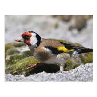 Cartão do Goldfinch