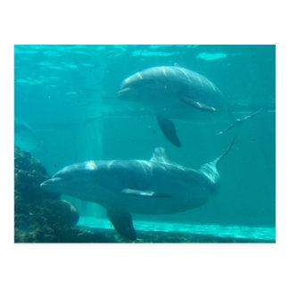 Cartão do golfinho