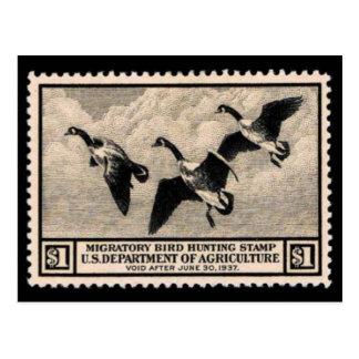 Cartão do gráfico do selo dos animais selvagens do