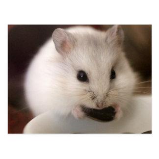 Cartão do hamster