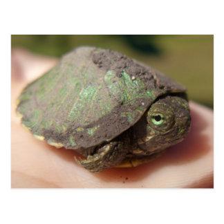 Cartão do Hatchling da tartaruga