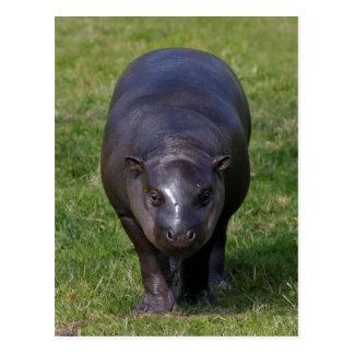 Cartão do hipopótamo do bebê