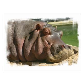 Cartão do Hippopotamus