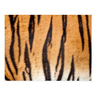 Cartão do impressão do tigre