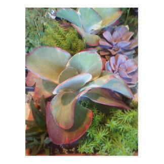 Cartão do jardim do recipiente do Succulent