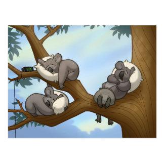 Cartão do Koala do sono