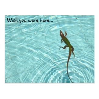 Cartão do lagarto da natação