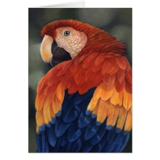 Cartão do Macaw