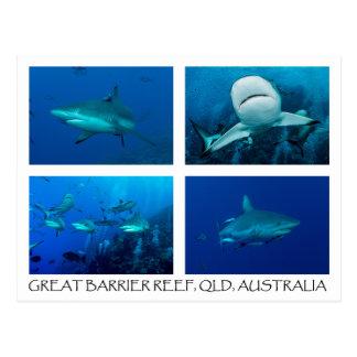 Cartão do mar coral - tubarões do recife