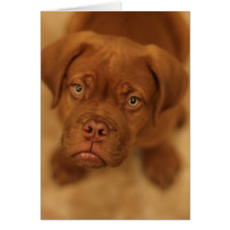 cartão do mastiff do filhote de cachorro de dogue