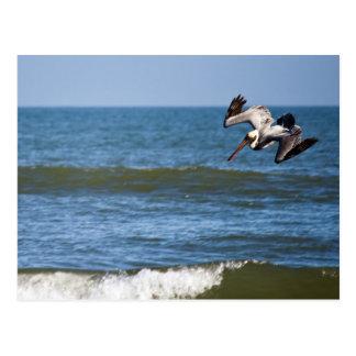 Cartão do mergulho do pelicano