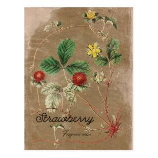 Cartão do morango silvestre do estilo do vintage