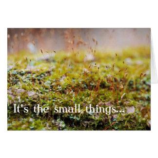 """Cartão do musgo - """"é as coisas pequenas… """""""