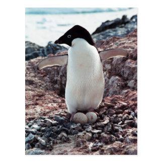 Cartão do ninho do pinguim de Adelie