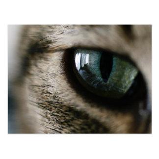 Cartão do olho de gato