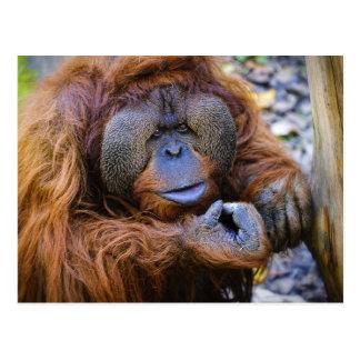 Cartão do orangotango