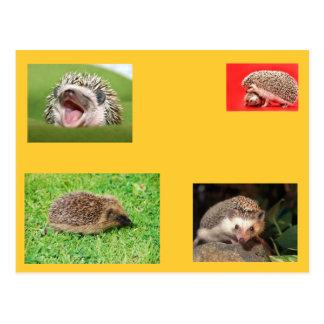 Cartão do ouriço! muito bonito!