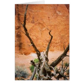 Cartão do parque nacional 1 dos arcos