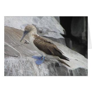 Cartão do pássaro