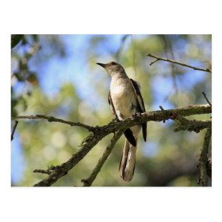 Cartão do pássaro de estado de Texas:  Tordo dos
