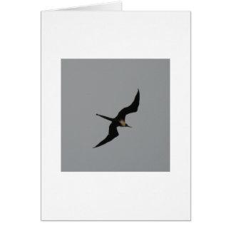 Cartão do pássaro de fragata