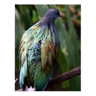 Cartão do pássaro do pombo de Nicobar Cartões Postais