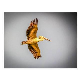 Cartão do pelicano