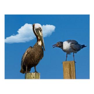 Cartão do pelicano e da gaivota