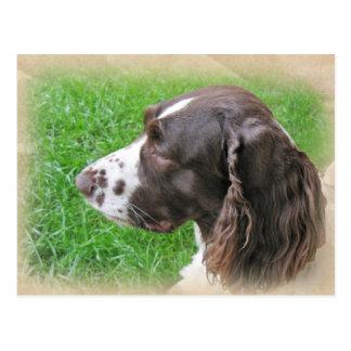 Cartão do perfil do Spaniel de Springer inglês