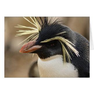 Cartão do pinguim de Rockhopper