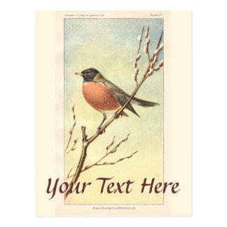Cartão do pisco de peito vermelho do vintage