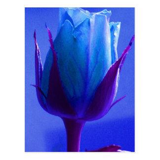 Cartão do prazer do rosa do azul - customizável cartão postal