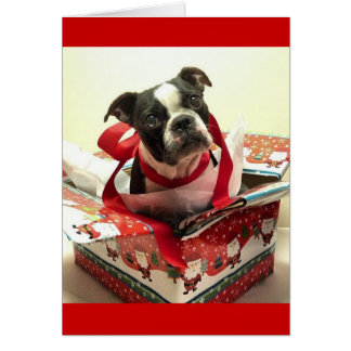 Cartão do presente de Natal de Boston Terrier
