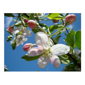 Cartão do primavera dos cartão das FLORES de APPLE