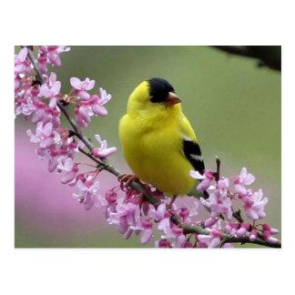 Cartão do primavera/fundo cor-de-rosa