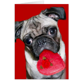 Cartão do pug do dia dos namorados