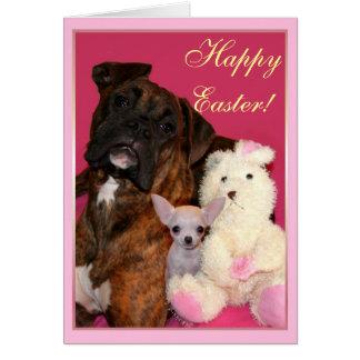 Cartão do pugilista e da chihuahua do felz pascoa