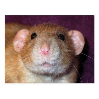 Cartão do rato de Dumbo