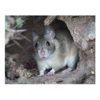 Cartão do rato de madeira