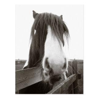 Cartão do retrato do cavalo do Sepia