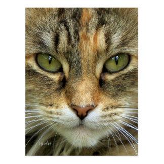 Cartão do retrato do gato de gato malhado