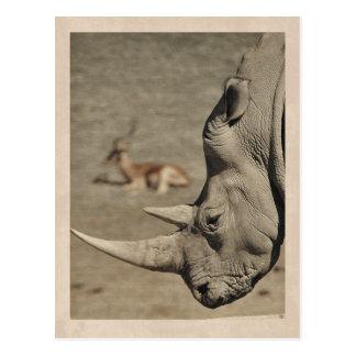 Cartão do rinoceronte do vintage