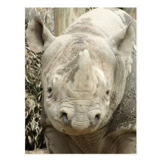 Cartão do rinoceronte preto