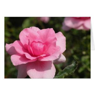 Cartão do rosa do rosa