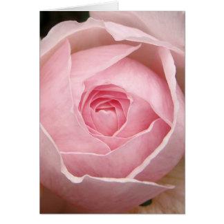 cartão do rosa do rosa de bebê