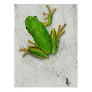 Cartão do sapo verde