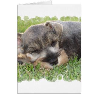 Cartão do Schnauzer Snoozing