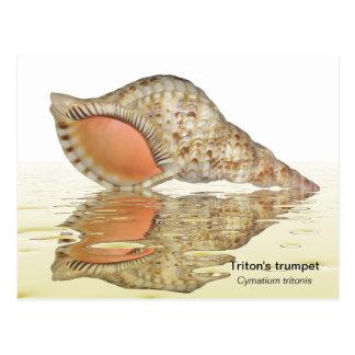 Cartão do seashell de Triton
