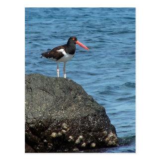 Cartão do Shorebird da pega-do-mar