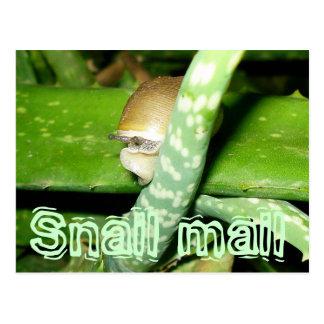 Cartão do snail mail